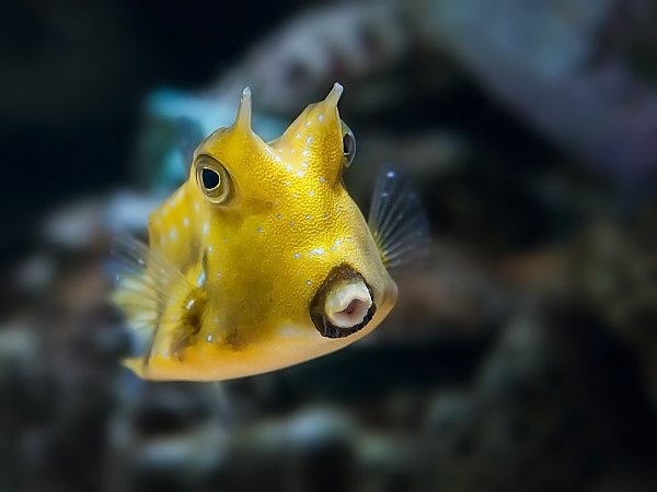 /email_images/PC-Breakfast-Invite-Cowfish.jpg{title}{/calendar:mainimageEV}