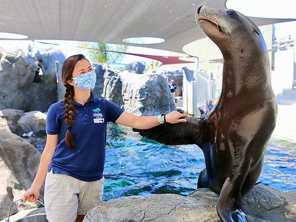 sea lion and trainer