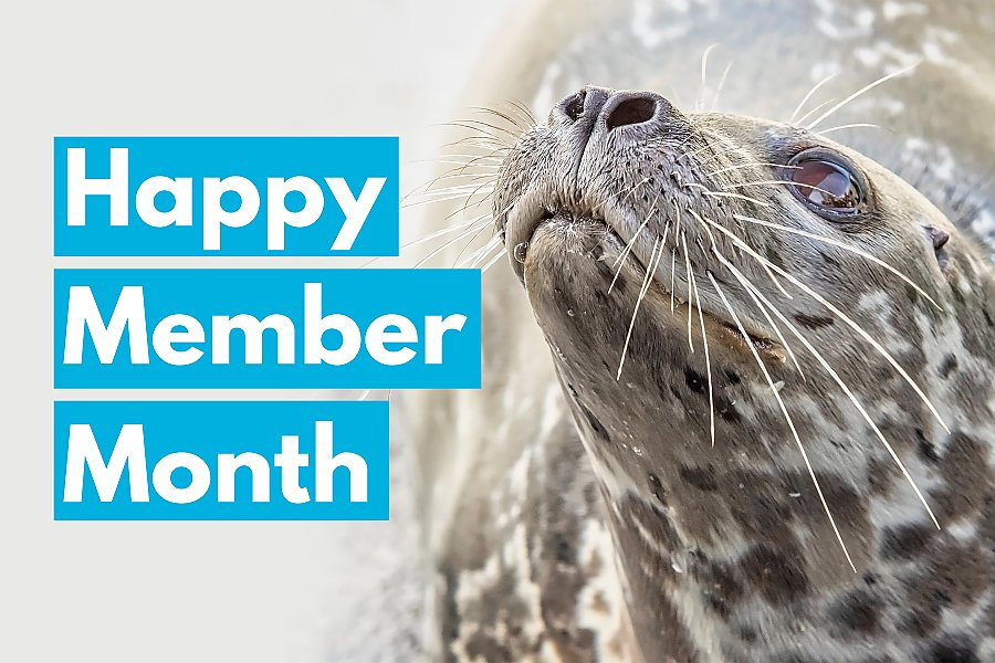 2020 happy member month with seal