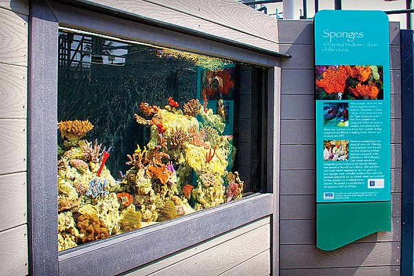 Coral and Sponge exhibit next to a sign