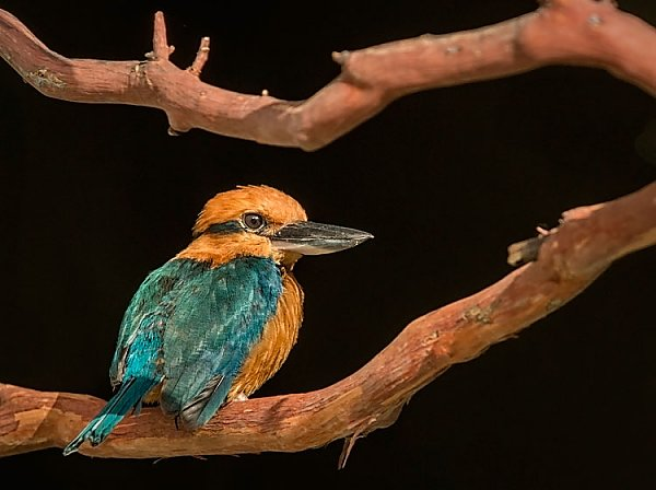 Kingfisher bird sitting on a branch
