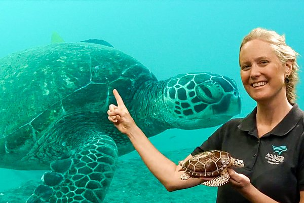 Online Academy educator holding sea turtle with sea turtle image in background