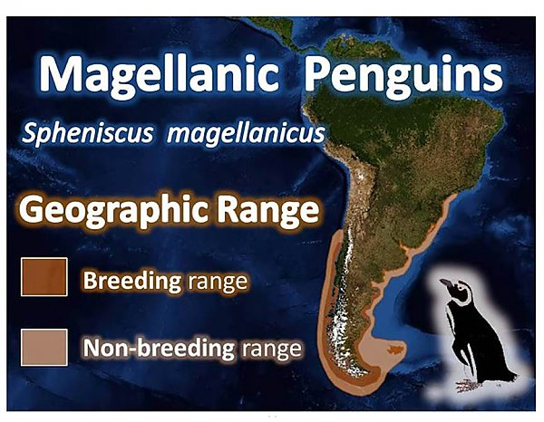 Map of penguin locations