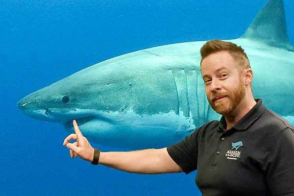 Academy educator pointing at the mouth of a shark