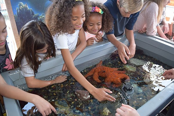 Kids at a tidepool touch tank