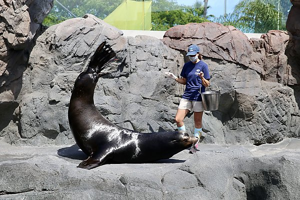 Mammalogist During Sea Lion Show