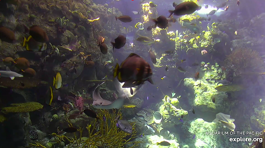 Tropical Reef Webcam capture