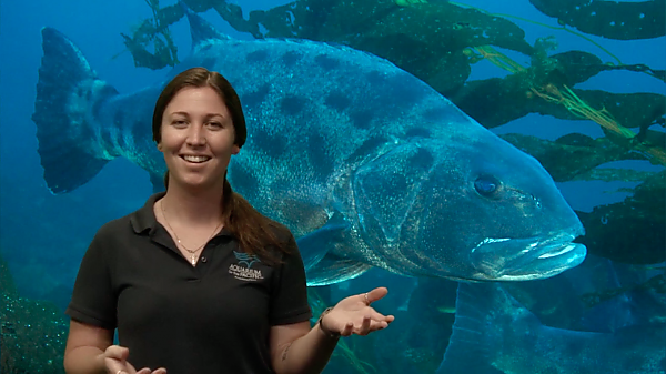 woman talks in front of giant sea bass on screen