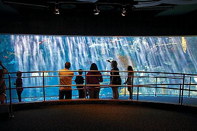 large exhibit window with people in front - thumbnail
