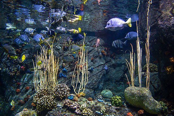 Gulf of California Exhibit showing fishing swimming and coral