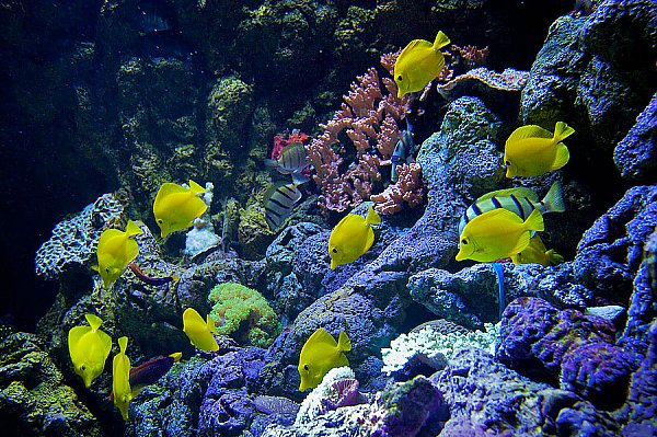 /images/exhibits/Hawaiian-Reef-Exhibit_LRG.jpg{title}{/calendar:mainimageEV}