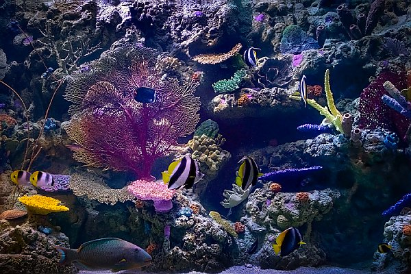 Tropical Pacific Gallery sideview of fish and coral