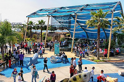 Shark Lagoon exhibit filled with people - thumbnail