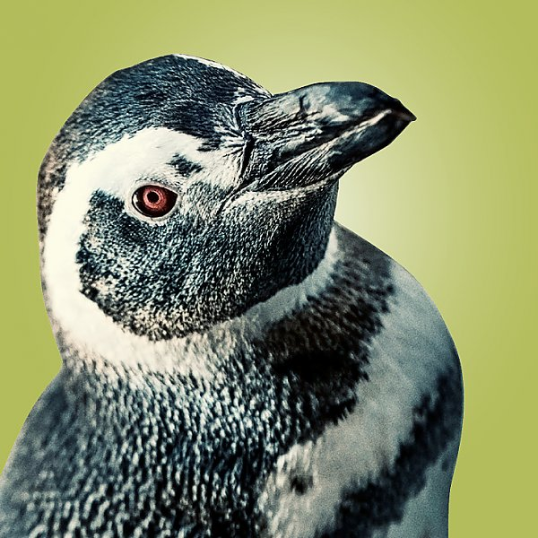 Skipper penguin portrait