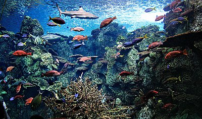 Many colored fish and shark in a tank - thumbnail