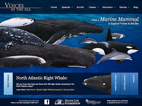 Group of whales and logo