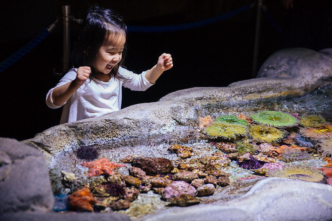 happy child at touch tank