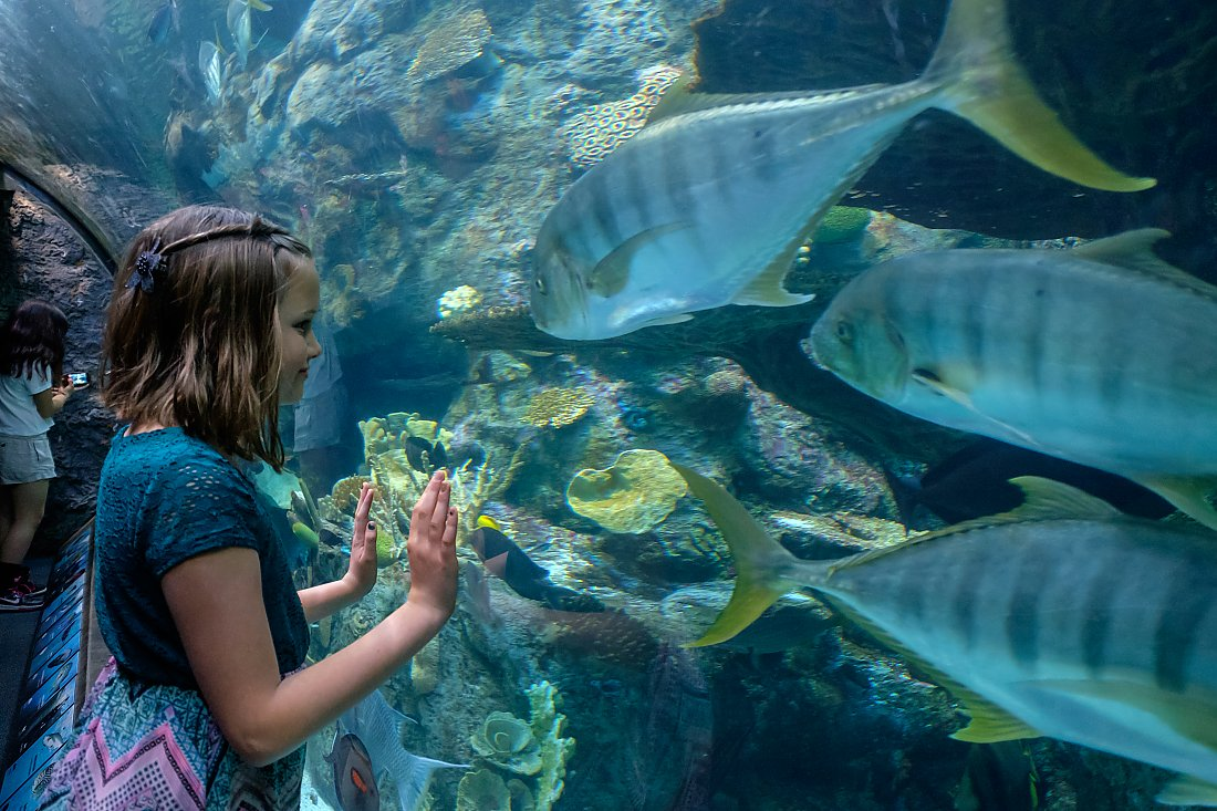 child looking closely at fish in exhibit