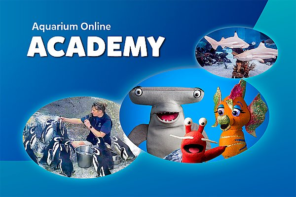 Aquarium Online Academy and three inset photos
