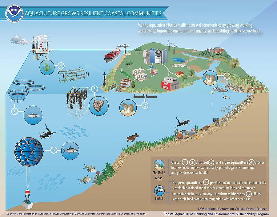 Graphic: Aquaculture grows resilient coastal communities