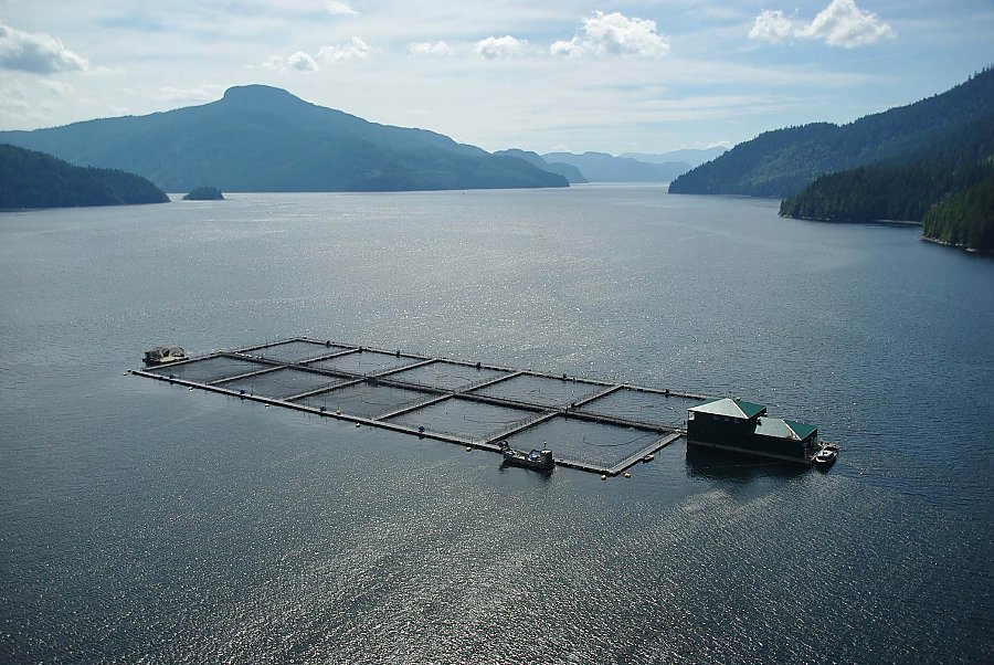 Overhead view of aquaculture farm