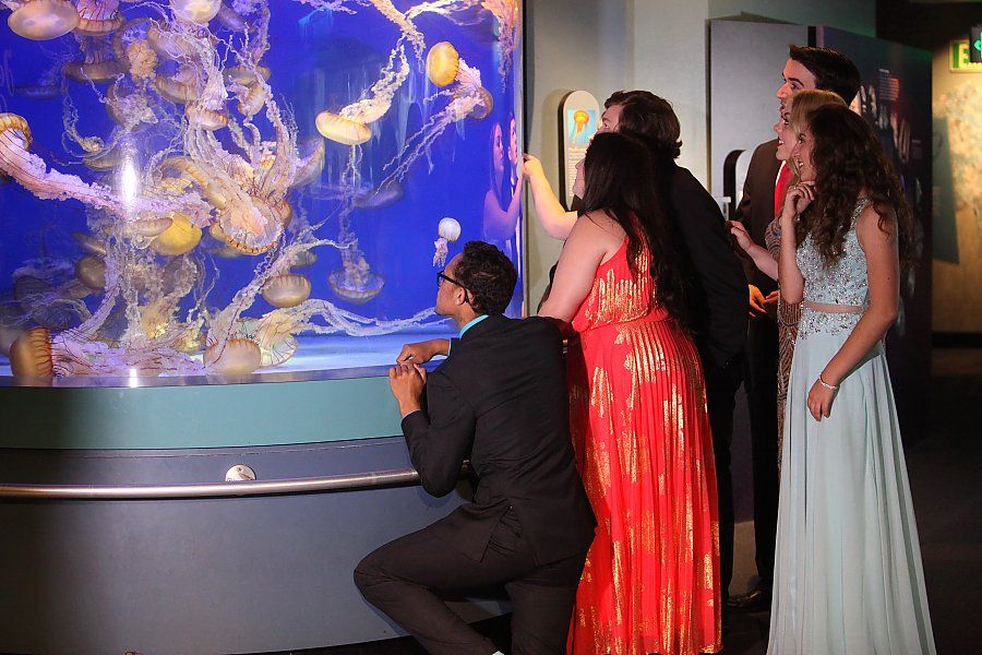 Prom attendees looking at sea jelly exhibit