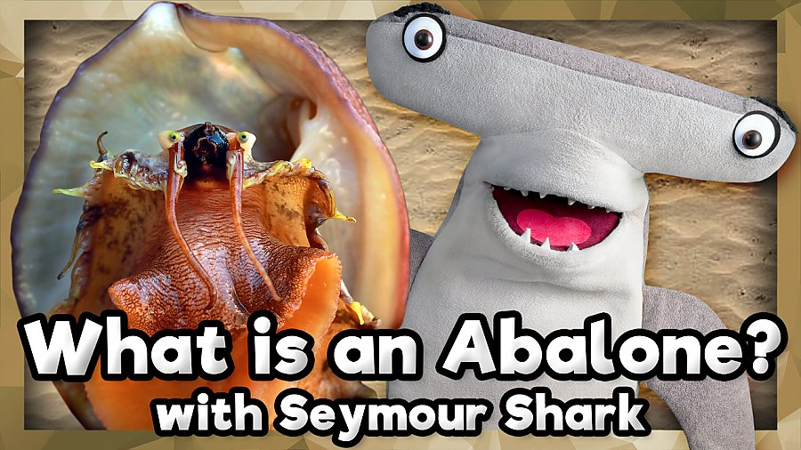 white abalone and puppet of Seymour shark