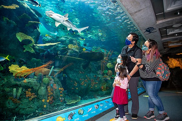 masked family with two young girls looks at shark swimming by in a large exhibit