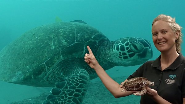 Academy educator in front of a sea turtle on screen