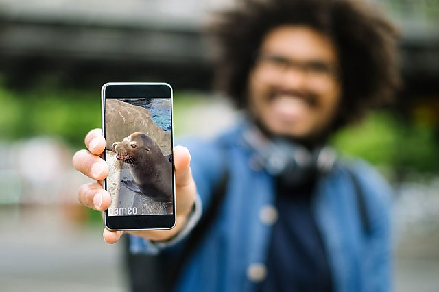 Man holds phone to camera showing a sea lion Cameo