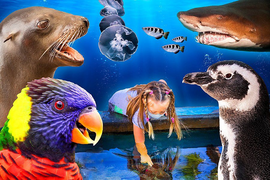 Collage of child at touch pool surrounded by animals