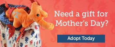 Adopt an Animal Promotion