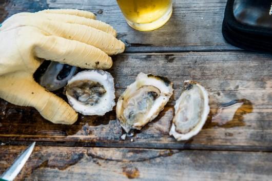 oysters aquaculture