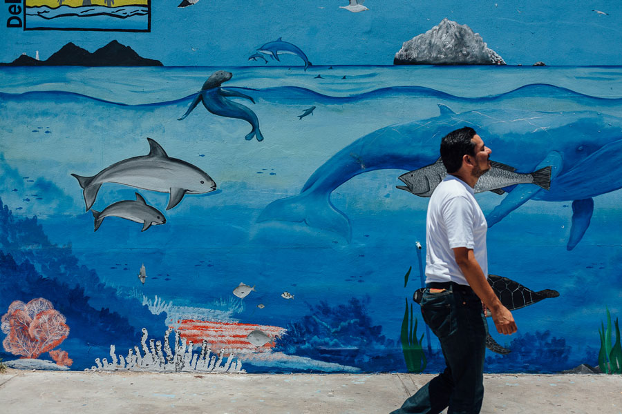 Mural of a vaquita in San Felipe