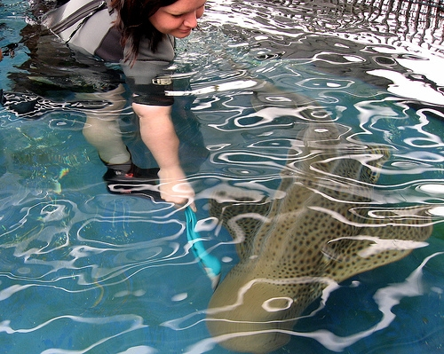 Animal Encounter: Sharks!