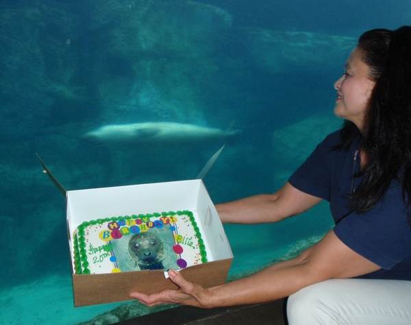 Celebrating Ellie the Harbor Seal's 20th Birthday
