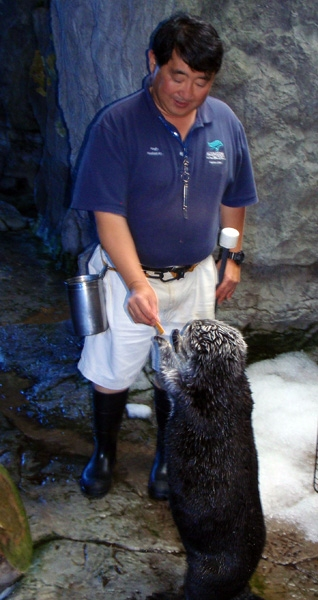 Brook Has Soft Paws, and Other Things I've Noticed About the Aquarium's Sea Otters