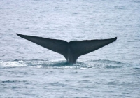 Join Kera and Alicia as They Report on  the Aquarium's Whale Watching Endeavors!