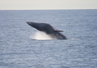 Fin Whales are Flying!