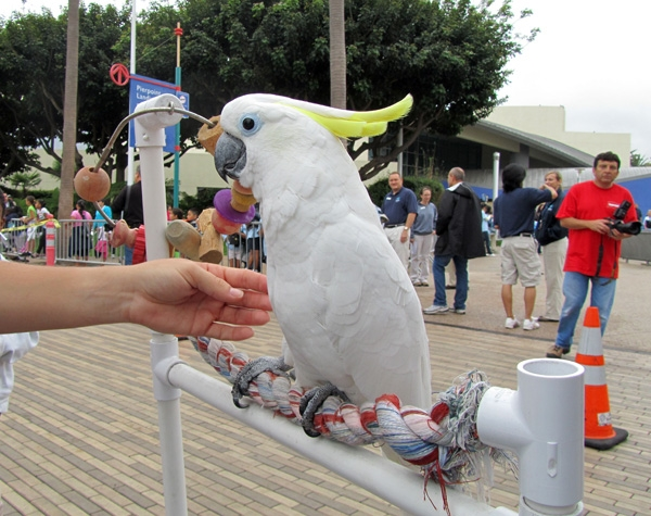 Lola the Cockatoo Starts a Race