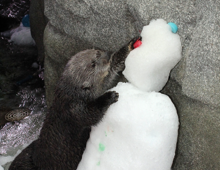 A Snowman for the Otters