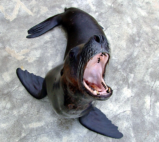 PARKER THE SEA LION FINDS HIS BARK