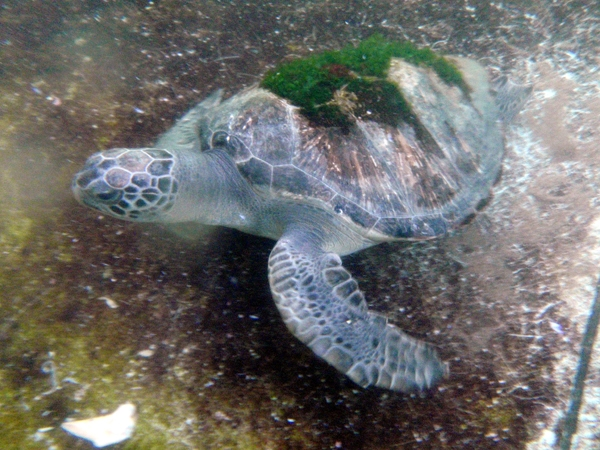 Endangered Sea Turtle Released Back Into The Wild