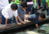 http://www.aquariumofpacific.org/images/blog_uploads/kids_at_touch_tank.JPG