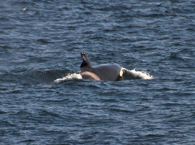 It's Official! We've Had Our First Blue Whale Sighting for 2012!