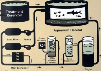 The ABC's of Filtration at the Aquarium