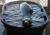 Behind-the-Scenes Sea Lion Update & Sustainable Seafood Day