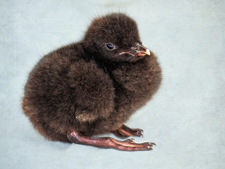 Cute Alert: Check Out Our Newest Baby Animals