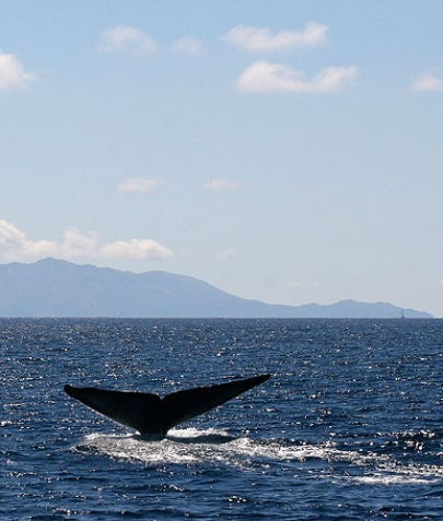Blue Whale and Sea Life Cruise