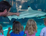 Aquarium Offers Summer Camp Programs for All Ages